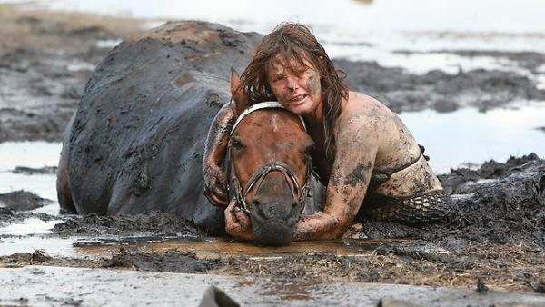 045135-horse-stuck-in-mud